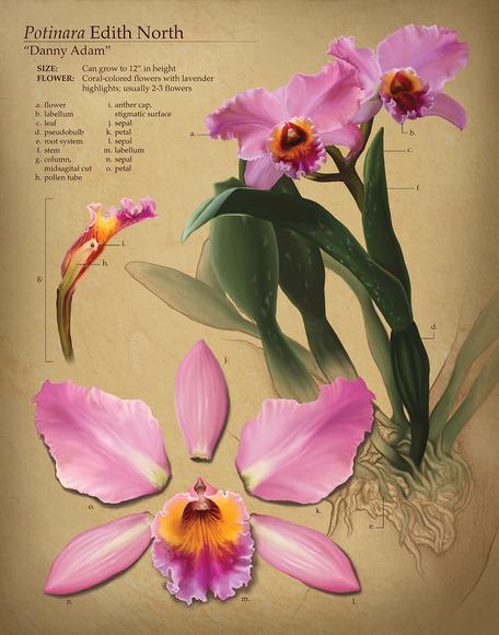 Biomedical Art student work by Martha Liechty